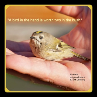 Customer Focus - A Bird In The Hand Proverb image